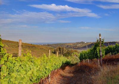plettenvale-wines-3