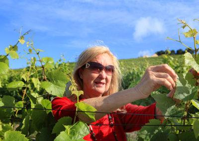 plettenvale-wines-13